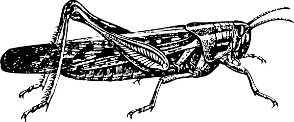 Locust svg #18, Download drawings