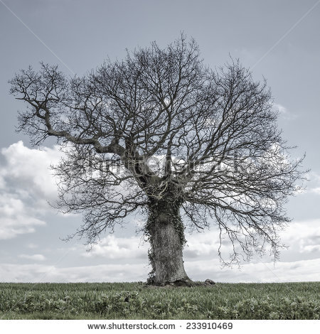 Lonely Tree clipart #7, Download drawings
