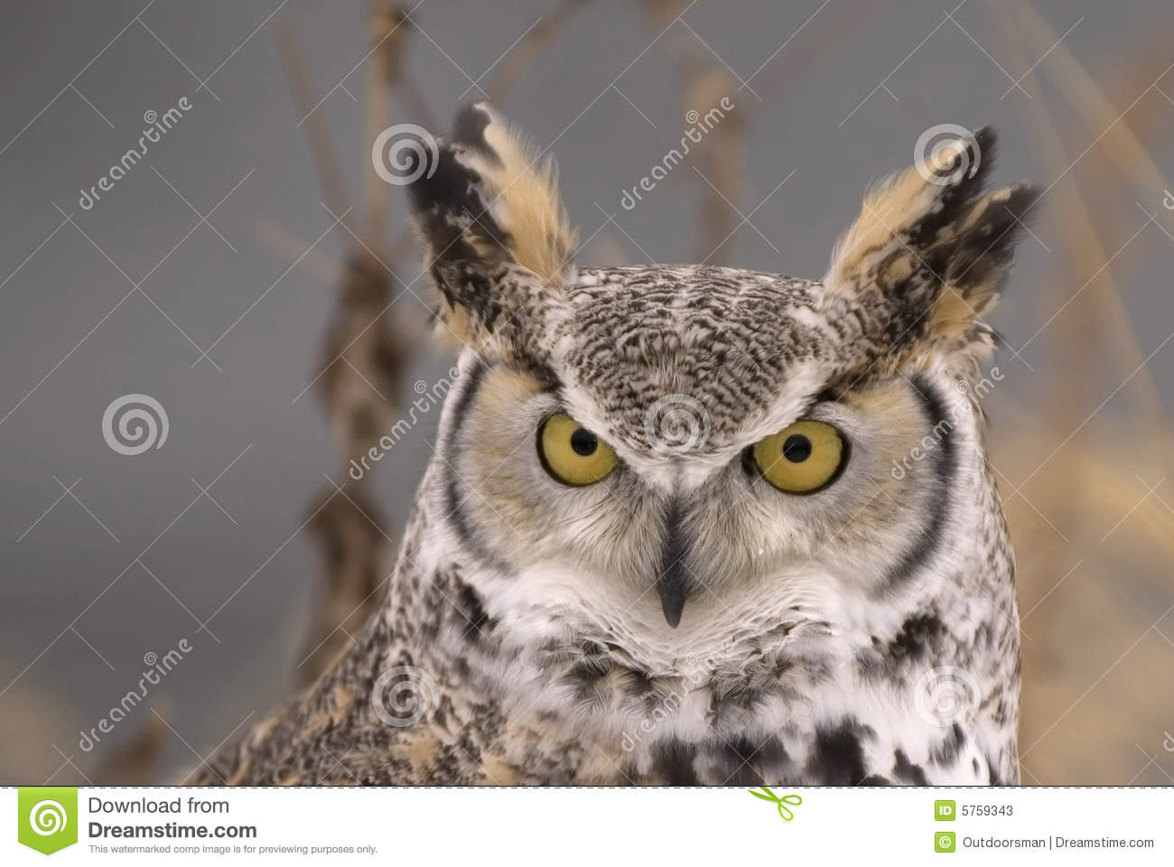 Long Eared Owl clipart #14, Download drawings