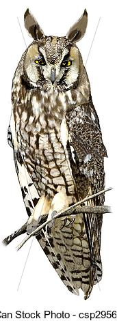 Long Eared Owl clipart #19, Download drawings