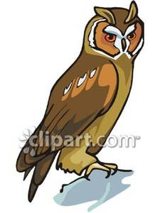 Long Eared Owl clipart #18, Download drawings