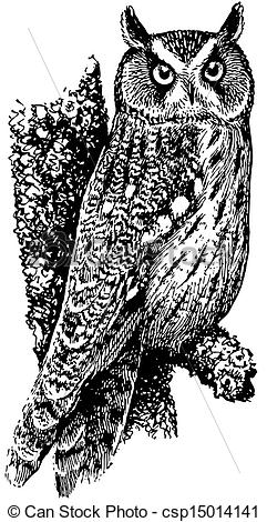Long Eared Owl clipart #12, Download drawings