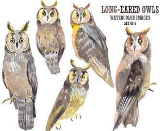 Long Eared Owl clipart #13, Download drawings