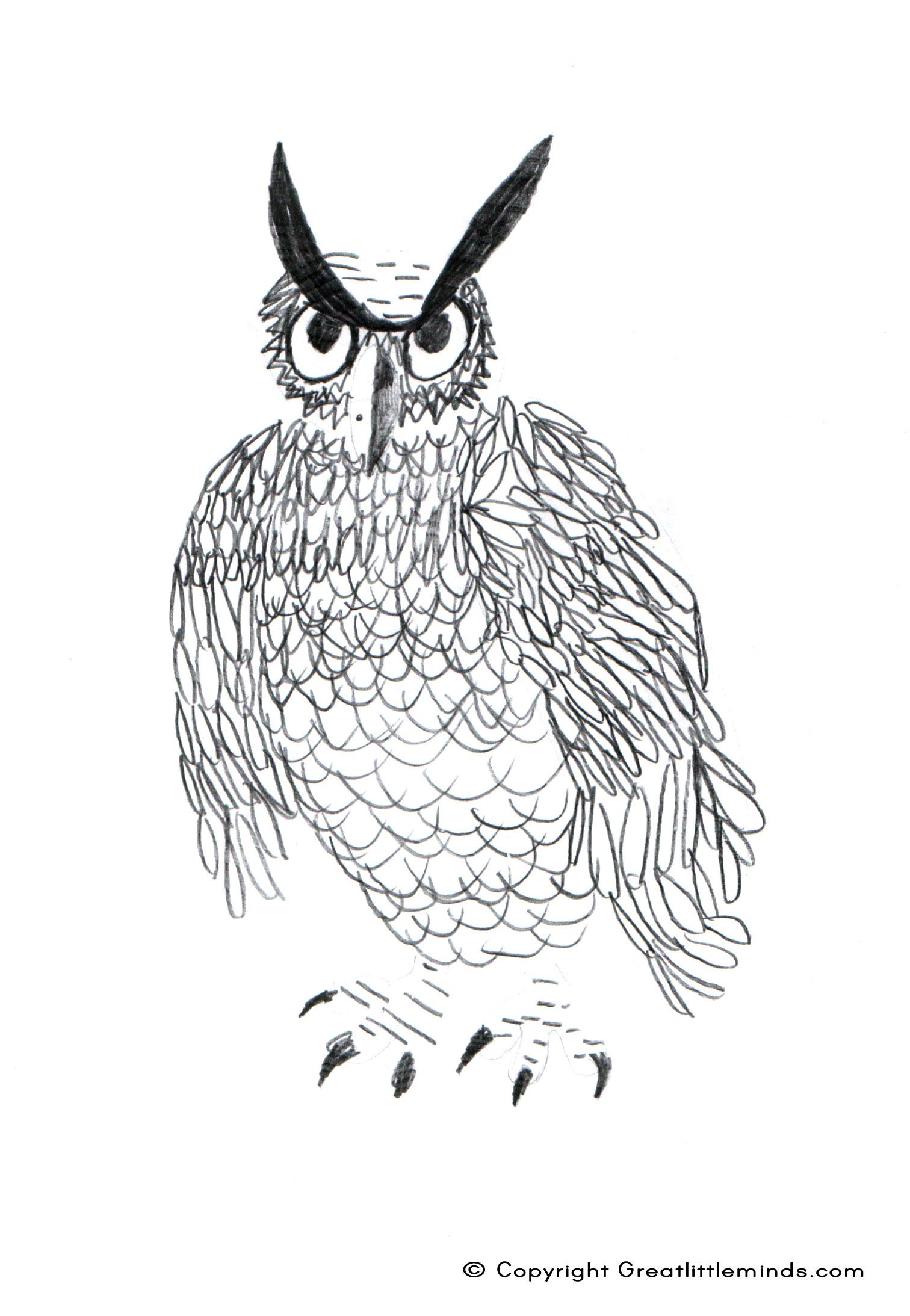 Long Eared Owl coloring #1, Download drawings