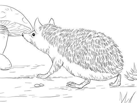 Long Eared Owl coloring #6, Download drawings