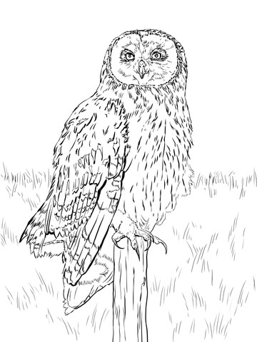 Long Eared Owl coloring #8, Download drawings