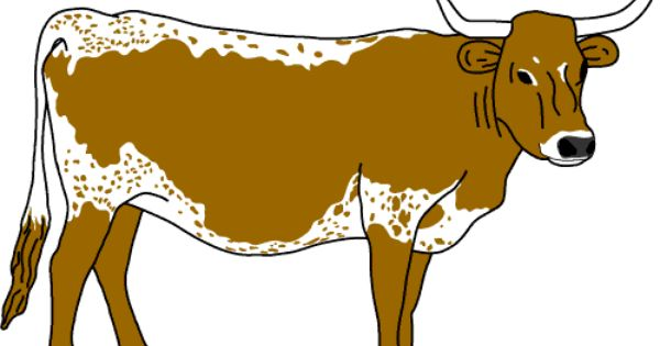 Longhorn Cattle clipart #9, Download drawings
