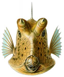 Longhorn Cowfish clipart #13, Download drawings
