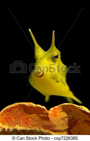 Longhorn Cowfish clipart #12, Download drawings