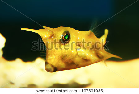 Longhorn Cowfish clipart #5, Download drawings