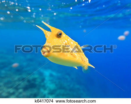 Longhorn Cowfish clipart #14, Download drawings
