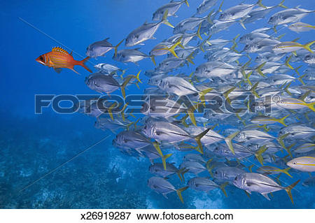 Longjaw Squirrelfish clipart #19, Download drawings