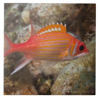 Longjaw Squirrelfish clipart #9, Download drawings