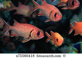 Longjaw Squirrelfish clipart #13, Download drawings