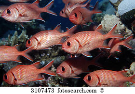 Longjaw Squirrelfish clipart #11, Download drawings