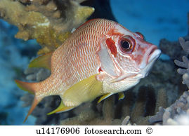 Longjaw Squirrelfish clipart #6, Download drawings