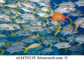 Longjaw Squirrelfish clipart #20, Download drawings
