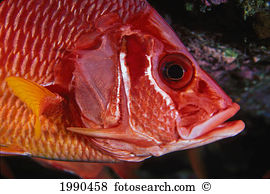 Longjaw Squirrelfish clipart #18, Download drawings