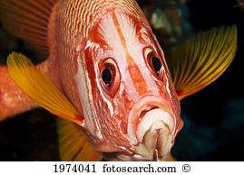 Longjaw Squirrelfish clipart #17, Download drawings