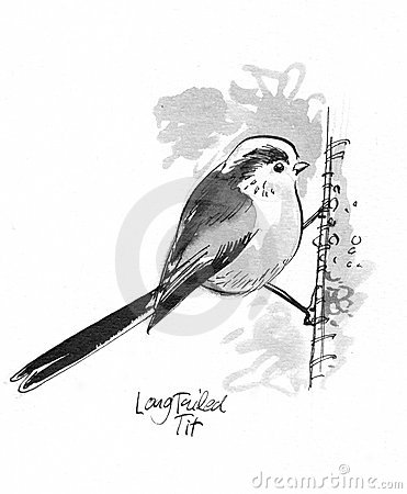 Long-tailed Tit clipart #20, Download drawings
