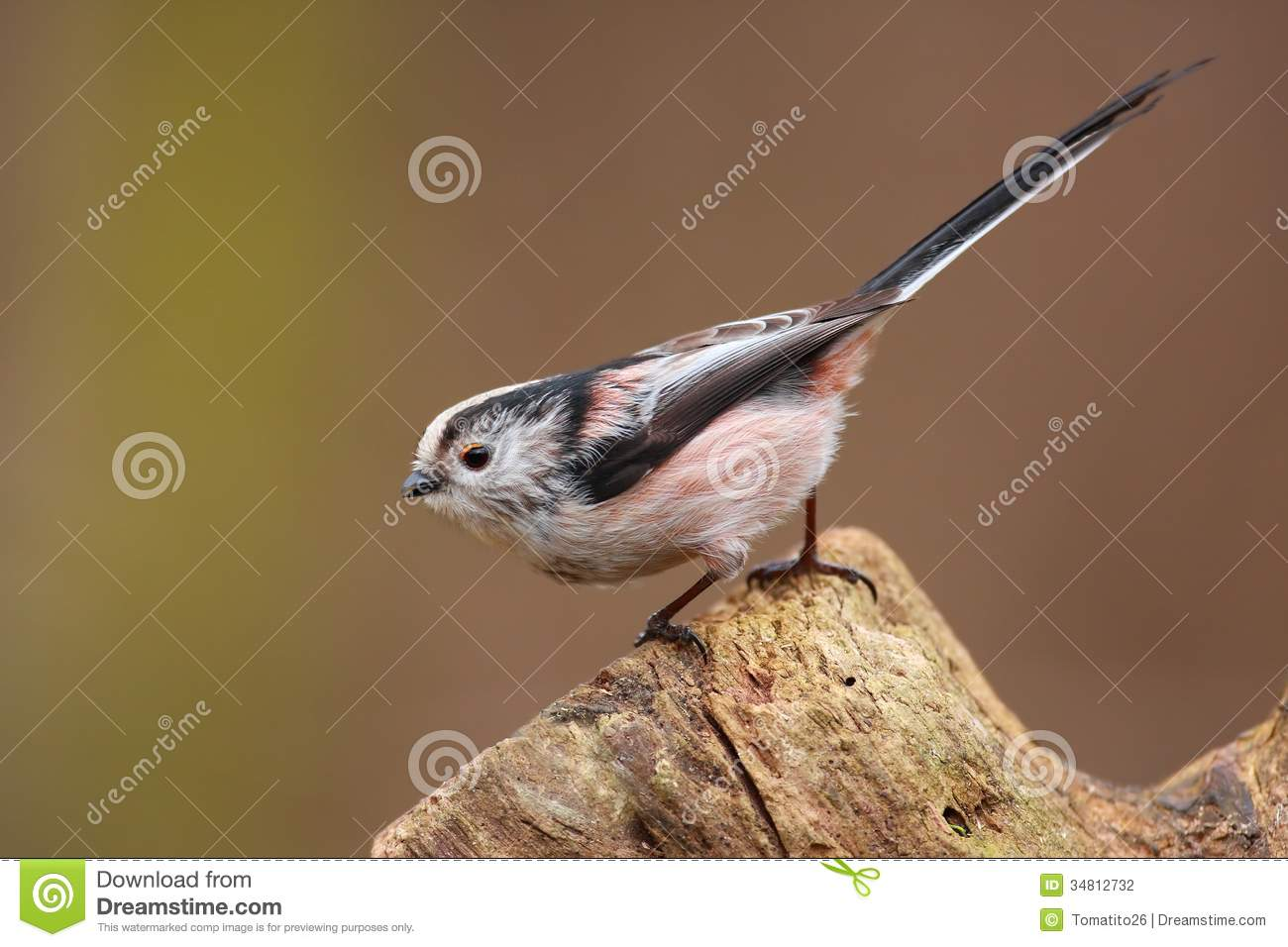 Long-tailed Tit clipart #14, Download drawings