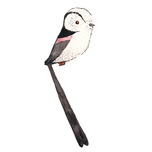 Long-tailed Tit svg #17, Download drawings