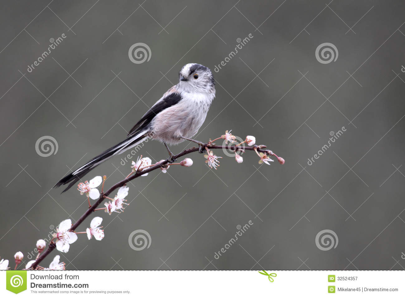 Long-tailed Tit clipart #18, Download drawings