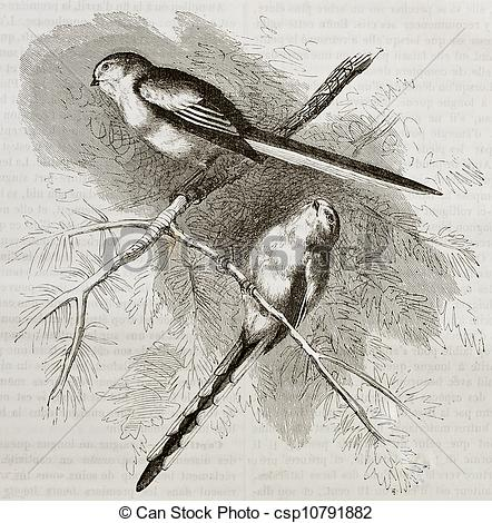 Long-tailed Tit clipart #15, Download drawings