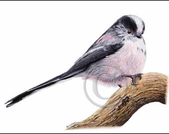 Long-tailed Tit svg #1, Download drawings
