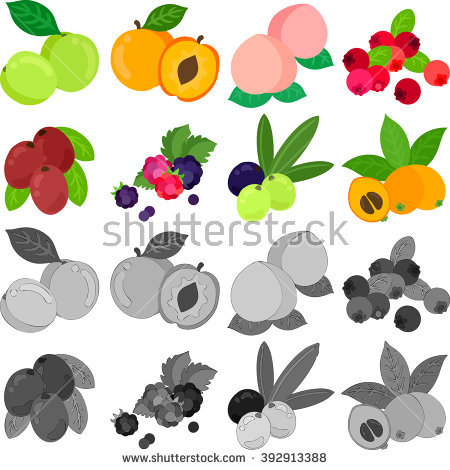 Loquat Berries clipart #16, Download drawings