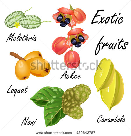 Loquat Berries clipart #18, Download drawings