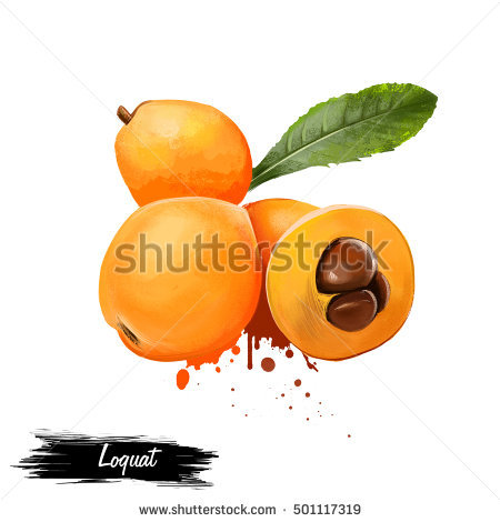 Loquat Berries clipart #19, Download drawings
