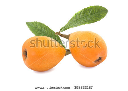 Loquat Berries clipart #15, Download drawings