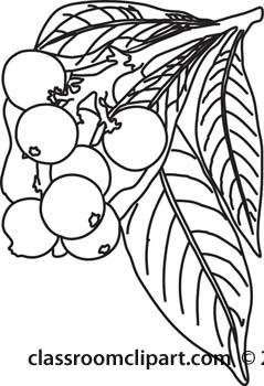 Loquat clipart #12, Download drawings