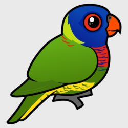 Lorikeet clipart #17, Download drawings