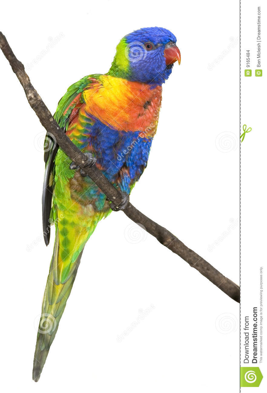 Rainbow Lorikeet clipart #14, Download drawings