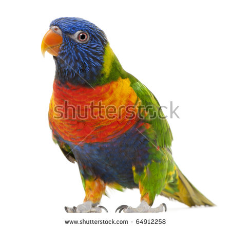 Lorikeet clipart #16, Download drawings