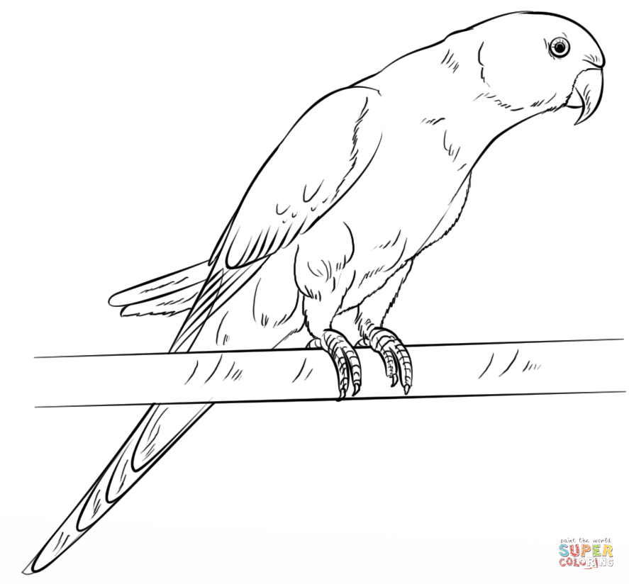Parakeet coloring #7, Download drawings