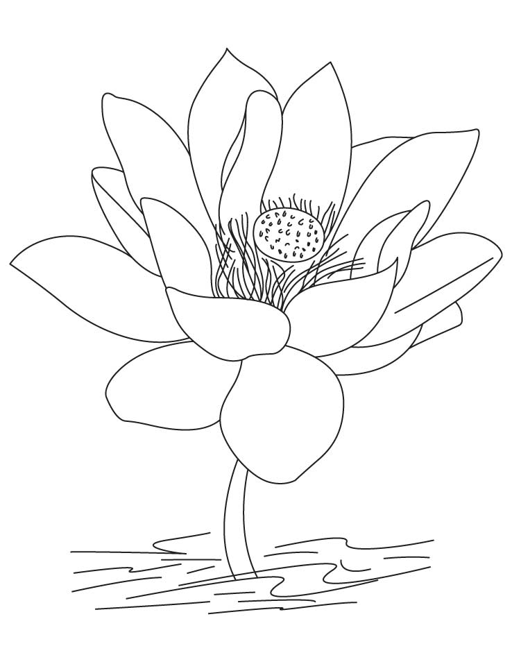 Lotus coloring #19, Download drawings