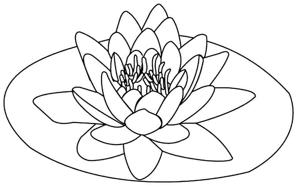 Lotus coloring #14, Download drawings