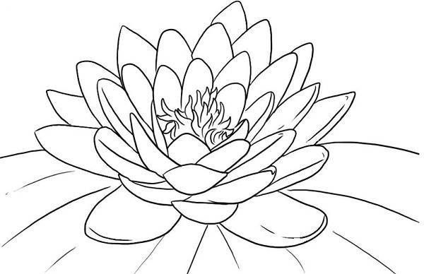 Lotus coloring #13, Download drawings