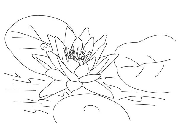 Lotus coloring #11, Download drawings