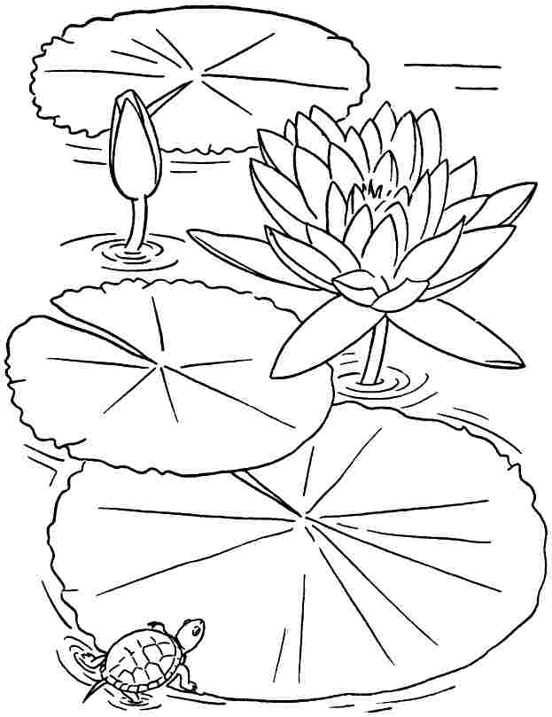 Lotus coloring #8, Download drawings