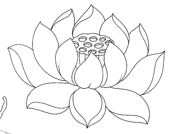 Lotus coloring #3, Download drawings