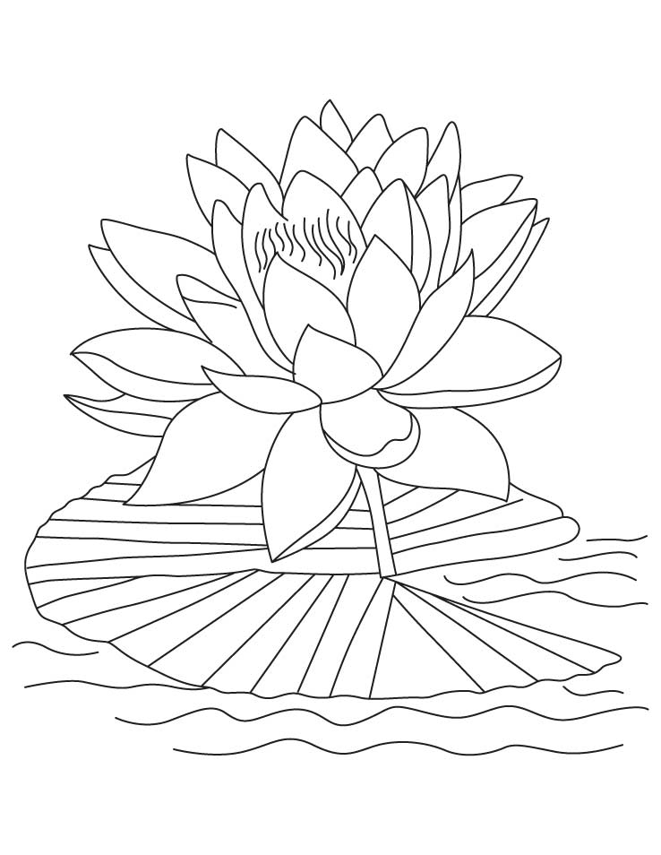 Lotus coloring #20, Download drawings