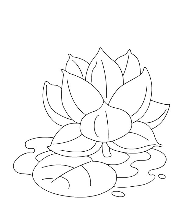 Lotus coloring #4, Download drawings