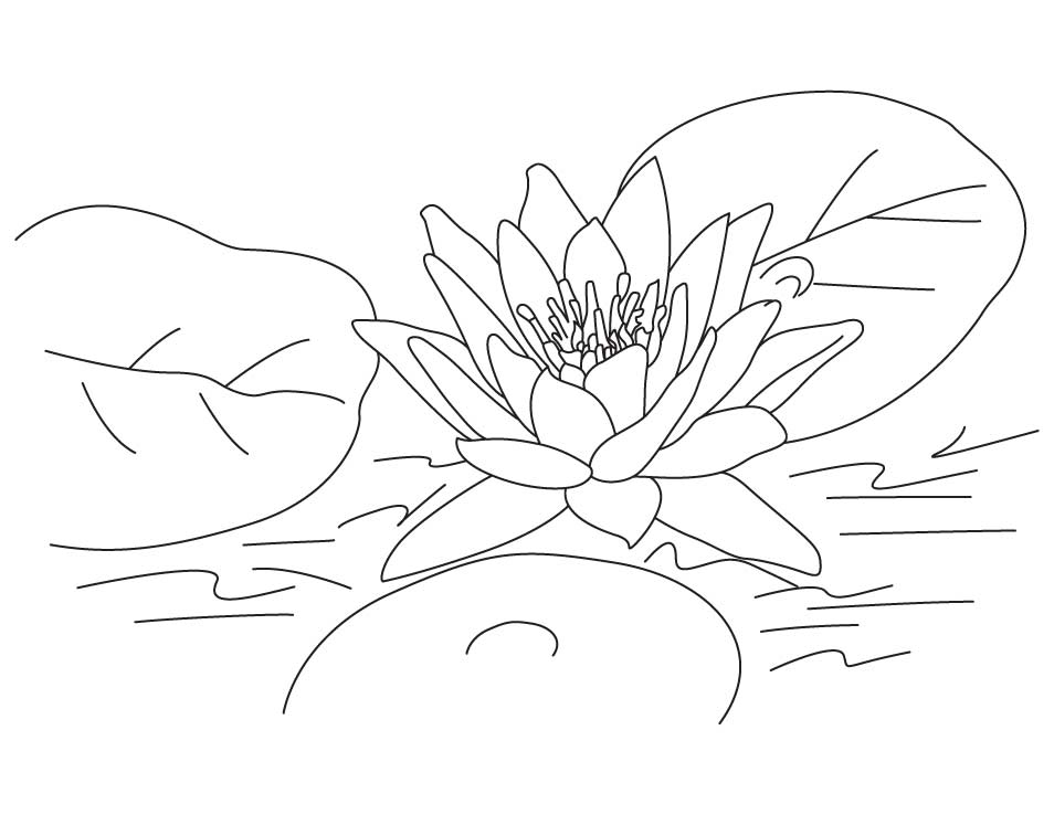 Lotus coloring #17, Download drawings