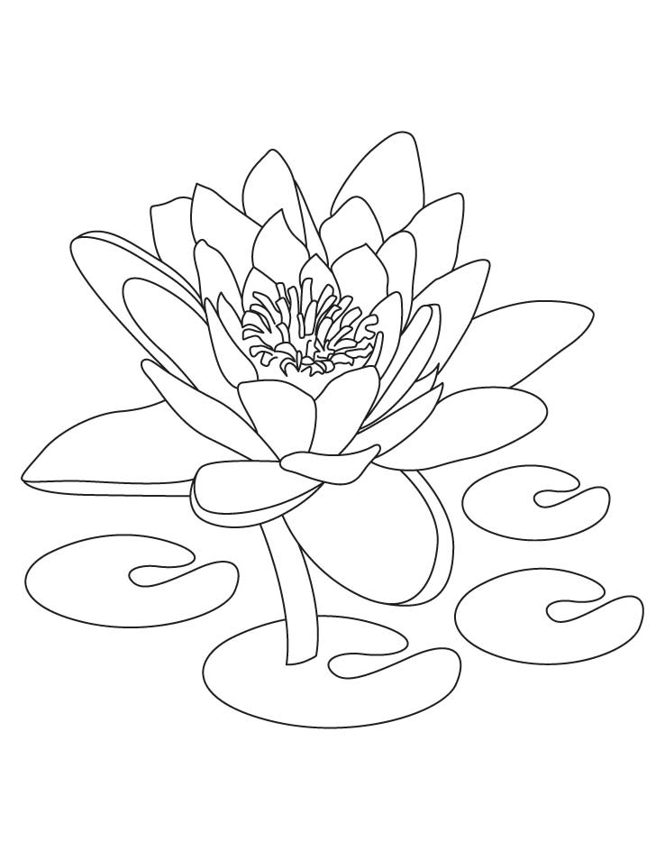Lotus coloring #18, Download drawings