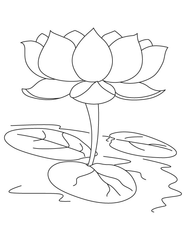 Lotus coloring #16, Download drawings