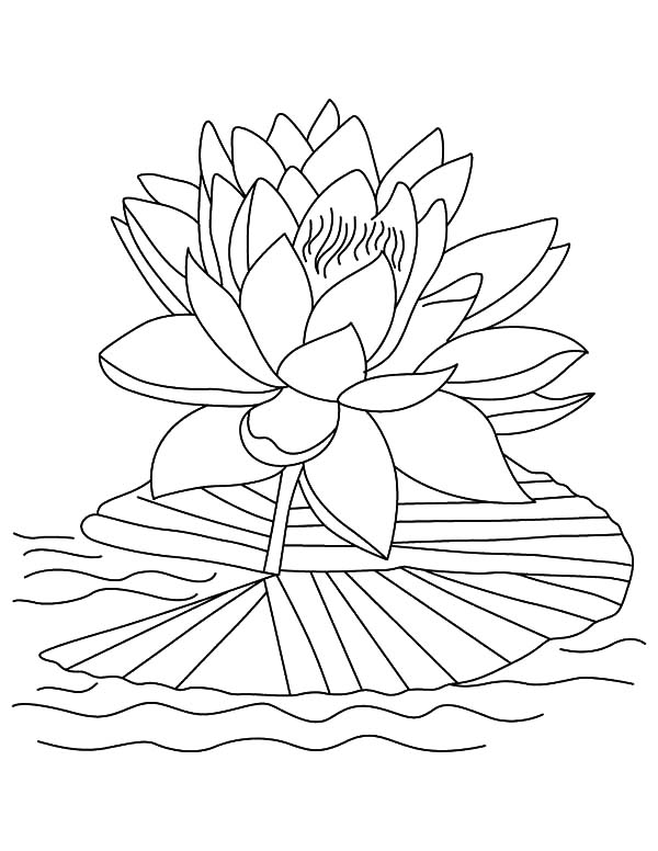 Lotus coloring #12, Download drawings